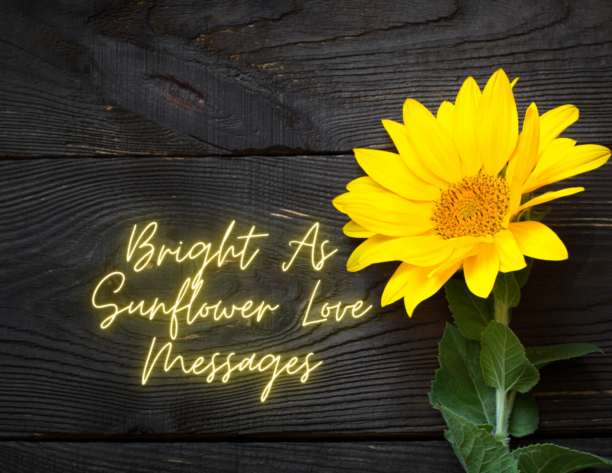 Bright as a Sunflower love messages