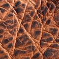 Kilauea Bison