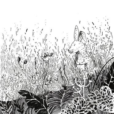 łąka   meadow