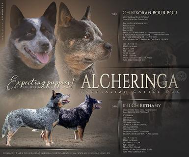 Alcheringa 1.jpg