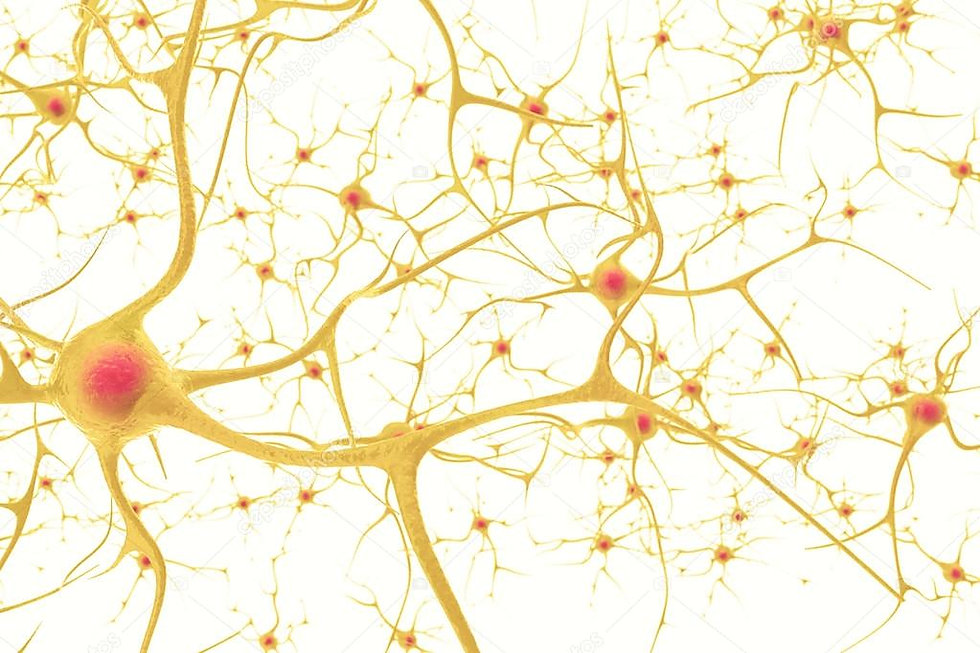 neural pathways