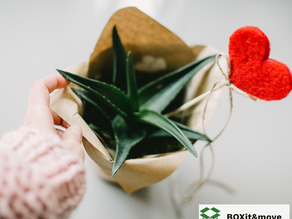 5 Ideas for Eco-Friendly Housewarming Gifts Moving