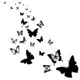 silhouettes-butterflies-black-white-background-67604854