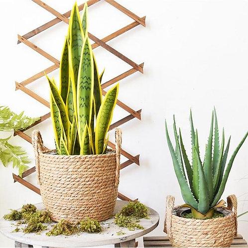 Louis Plant Basket, Flower Basket, Planter