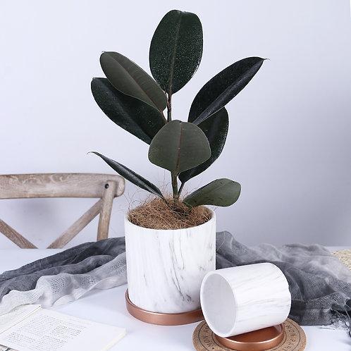 Sander Ceramic Plant Pot, Flower Pot, Planter