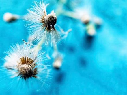 סביון,חצי סביון ויום כחול 💙_#iphone_onl