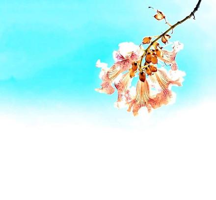 ״ פרח חן לקטוף חפצנו ״.jpg