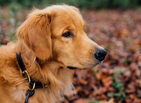 Tips: Trail Safety with Your Dog