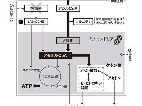 脂肪酸からケトン体が作られる仕組み(2020.11.5)