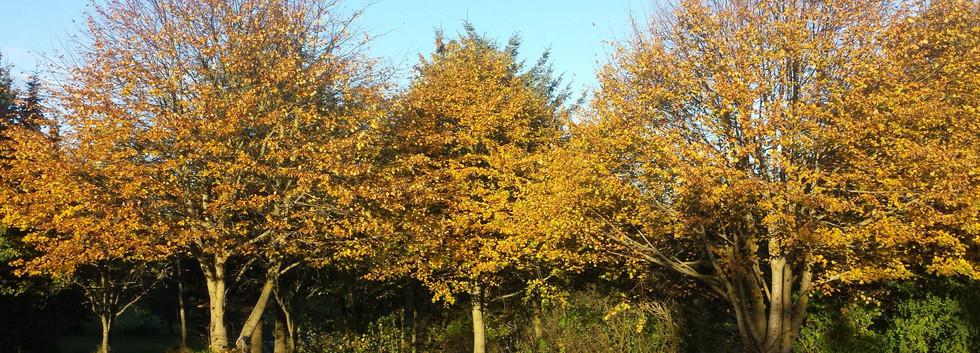 efterårs farver