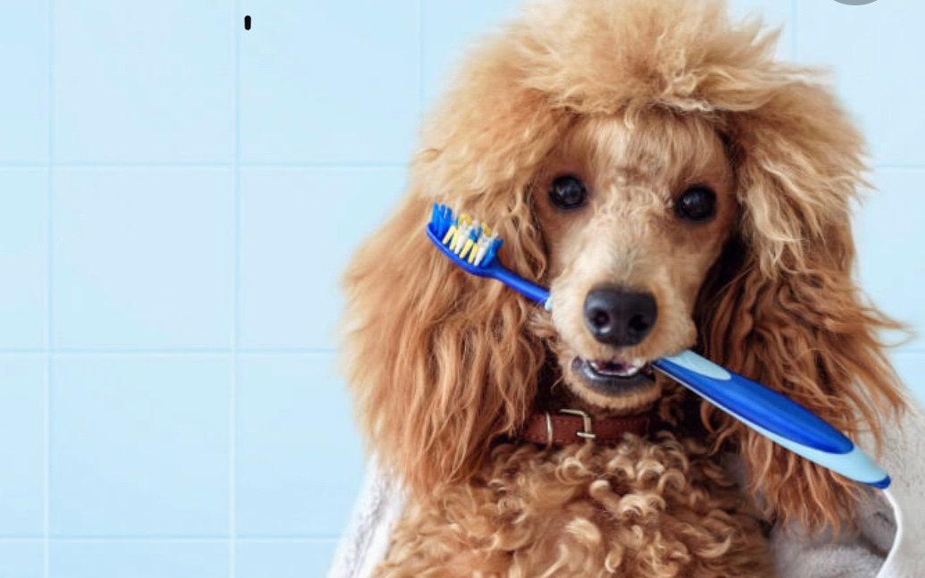 Emmi Pet Teeth Cleaning