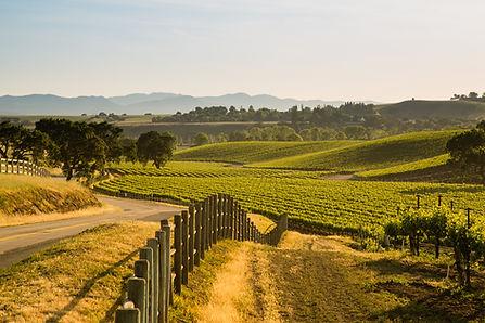 SANTA-YNEZ-VALLEY-fields-wine-club-tasti