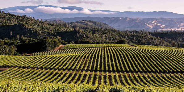 lodi-wine-region-ava-wine-club-tastning-