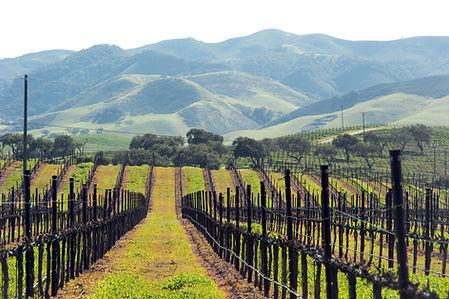green growth in central coast, californi