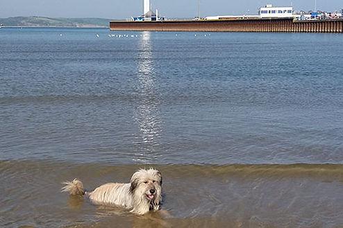 Ziggy in the sea 1 - Web.jpg