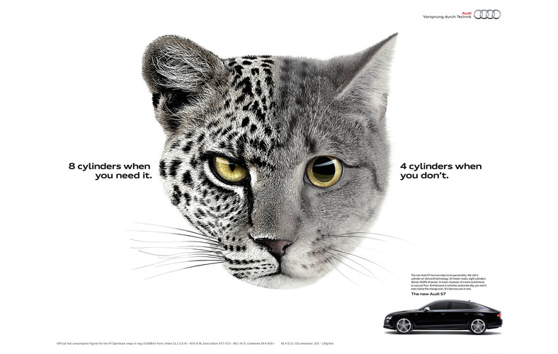 Audi_Cats.jpg