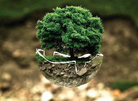 Environmental Consideration When Picking Printers
