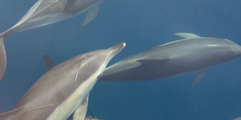 Dolphins come along with us during course to Javea