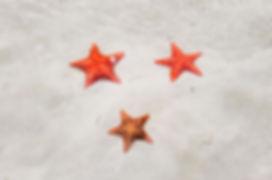 Estrellas de mar en Bocas del Toro, Panamá