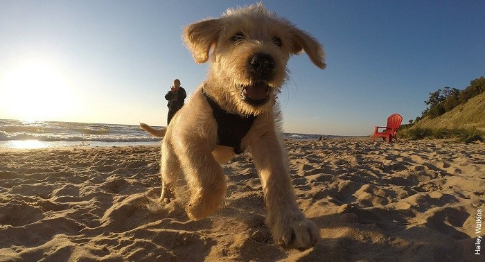Puppy at Kirk Park
