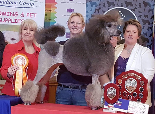 2019 County Grooming Championship
