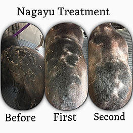 Nagayu treatment