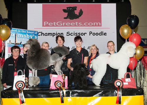 Madra Mania 2019 3rd in Champion Scissored Class