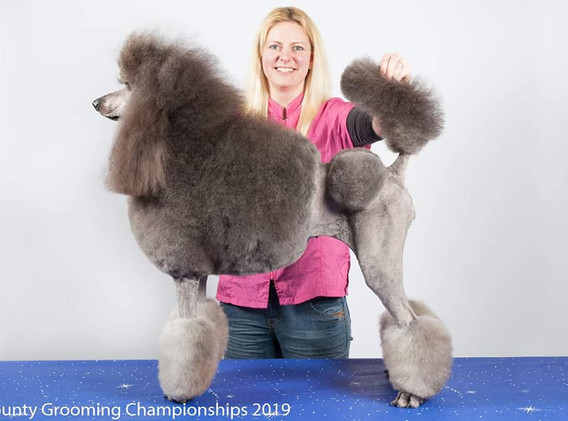 Best in show at 2019 County Grooming Cha