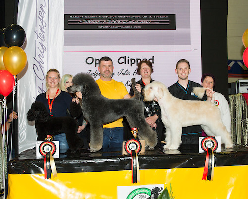 Madra Mania 2019 2nd in Open clipped class