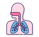 lung2_2x.png