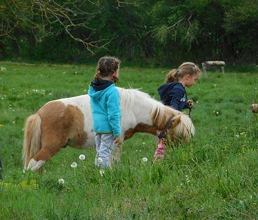 Baby poney au Pony Run Run