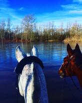 Les Chevaux au bord de l'eau