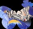 Logo Butterfly Cocoon