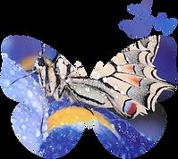 Logo de Butterfly Cocoon