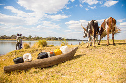 Kavangos uses ox for water