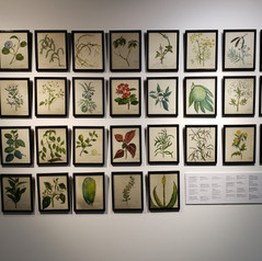 Bushmedicine drawings