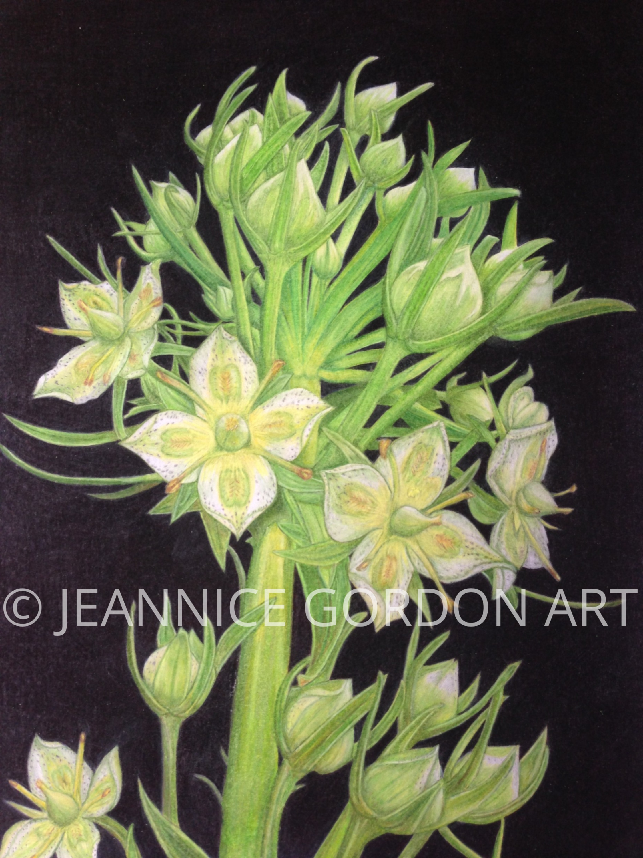 COLORADO MONUMENT PLANT by Jeannice Gord