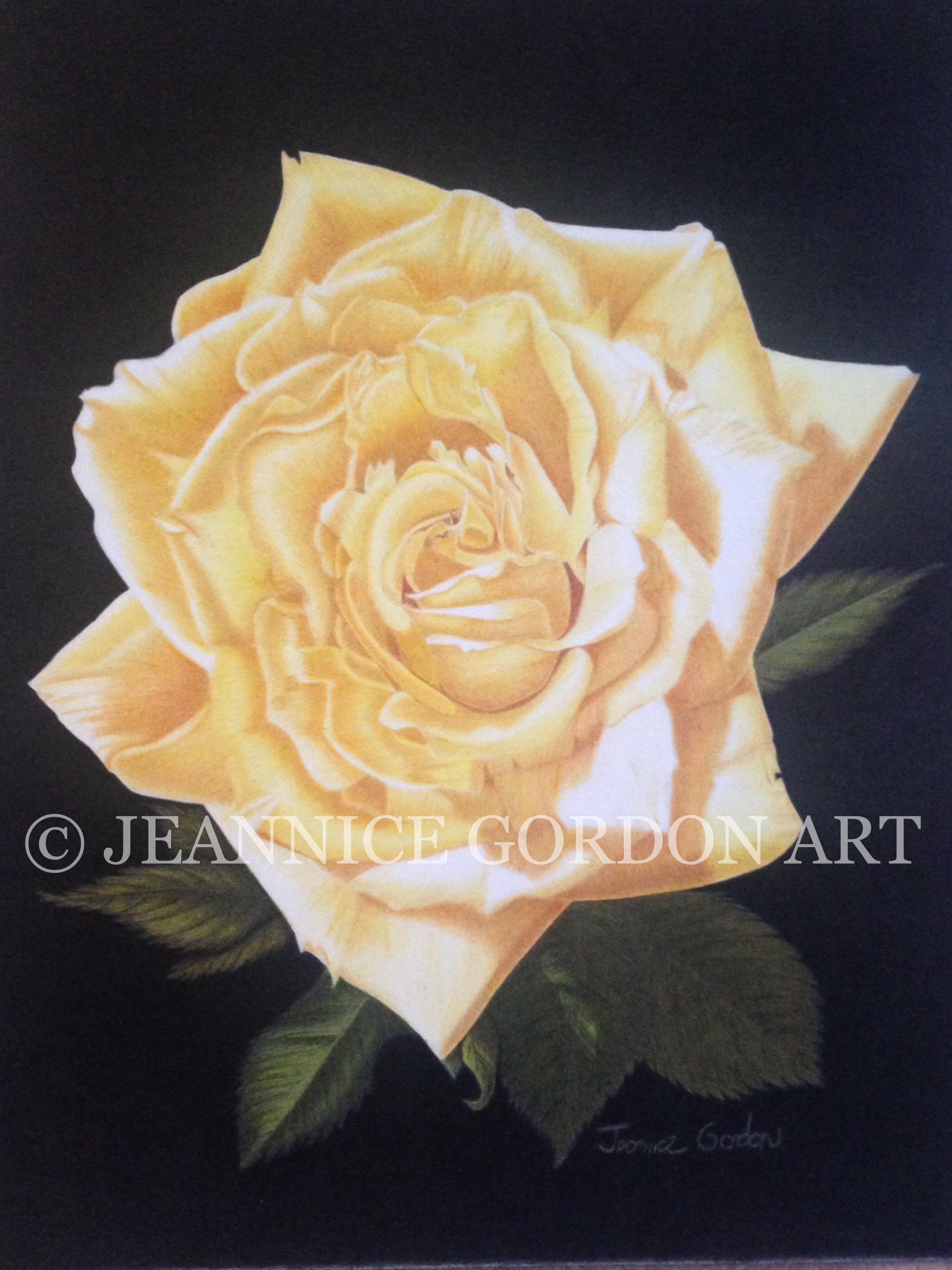 Julie's Yellow Rose by Jeannice Gordon