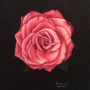 Blushing Beauty Rose - Print