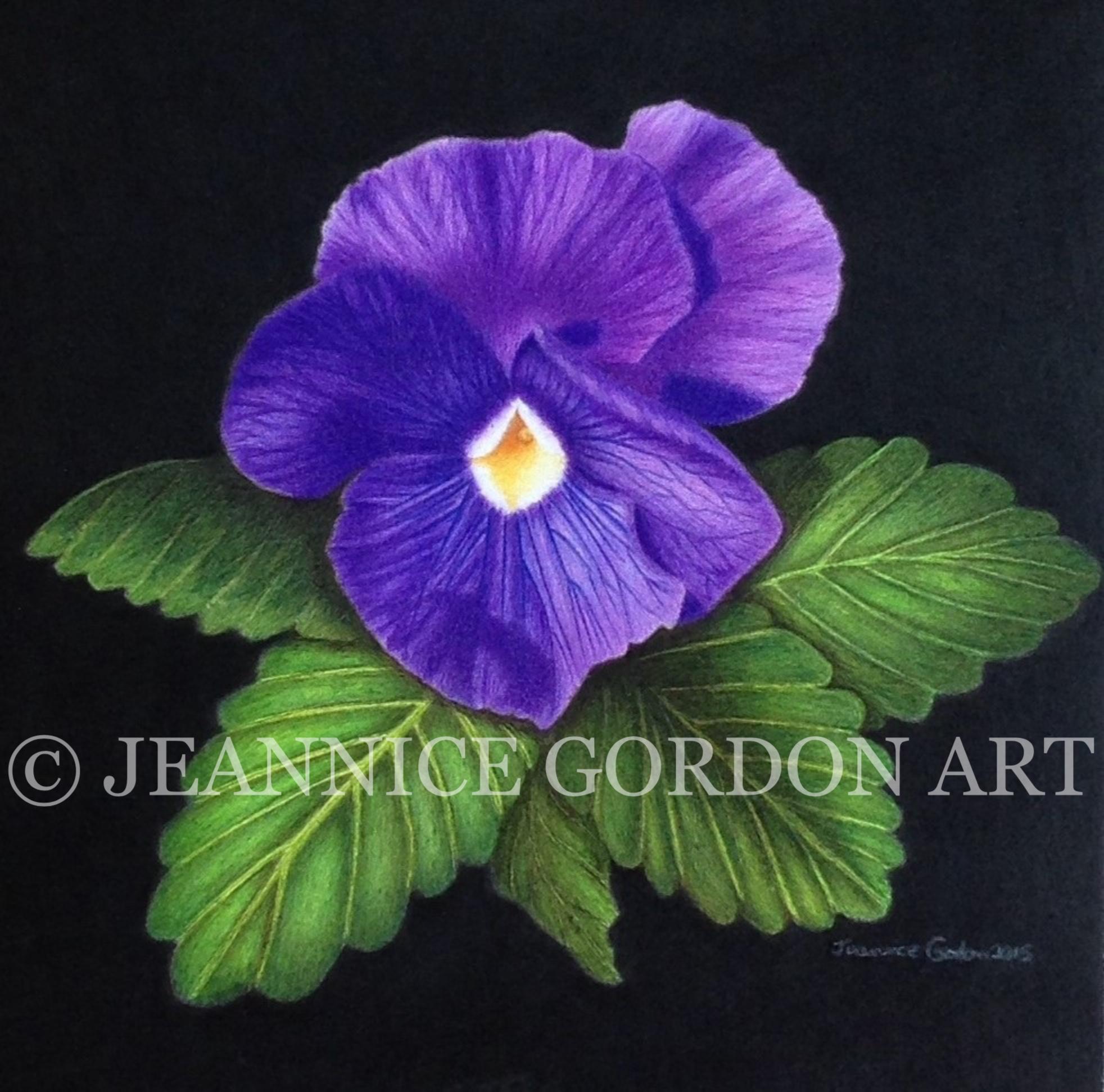 Purple Pansy for website.JPG