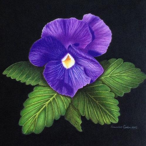 Purple Pansy - Print