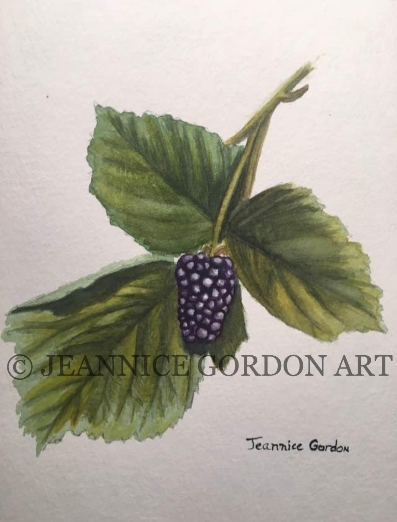 Blackberry watercolor2_edited
