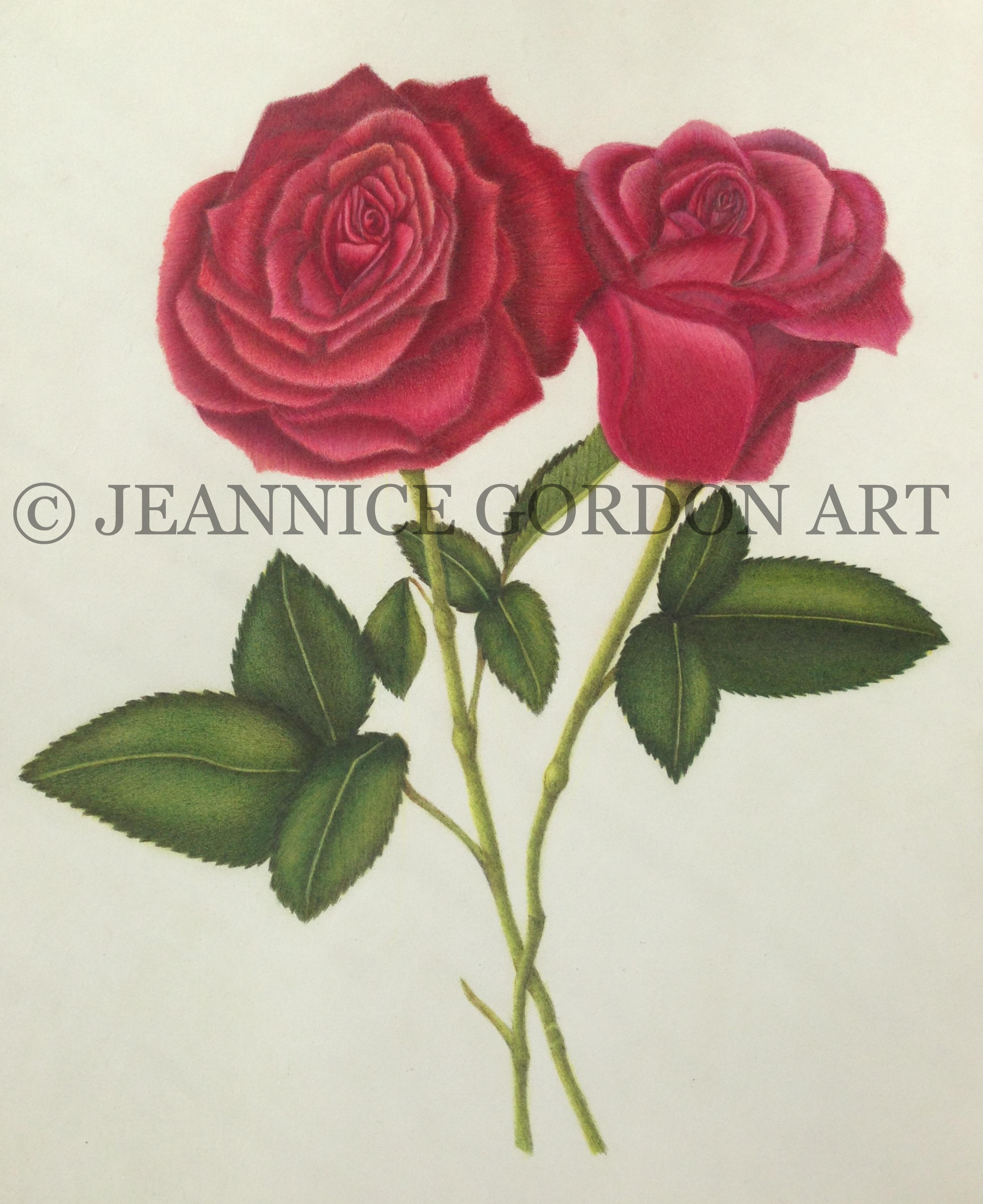 Freedom Rose (2).JPG-2