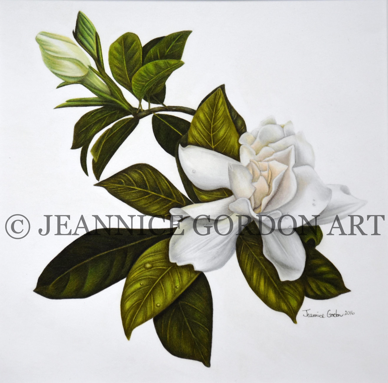 Gardenia 2 (3)-2