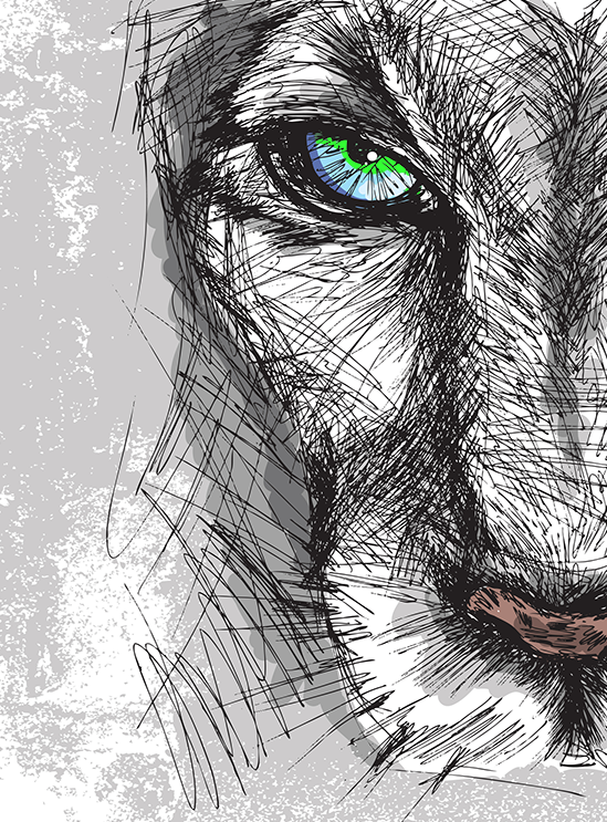 Wild_cat_drawing.png