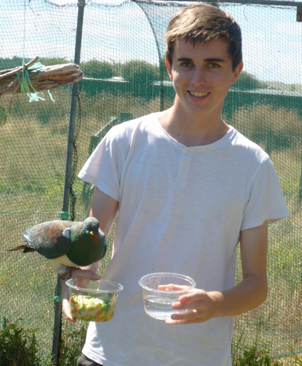 Kyle feeding a kereru