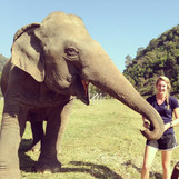 Vet Work with Elephants in Thailand!
