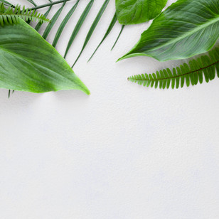 top-view-multiple-leaves.jpg