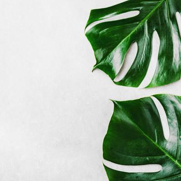 monstera-green-leaves-grey.jpg