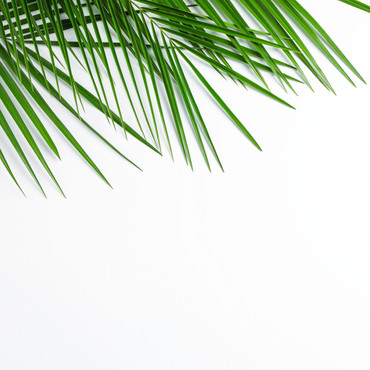 beautiful-palm-leaves-white-background-t